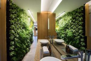 plantas para cuarto de baño sin luz natural
